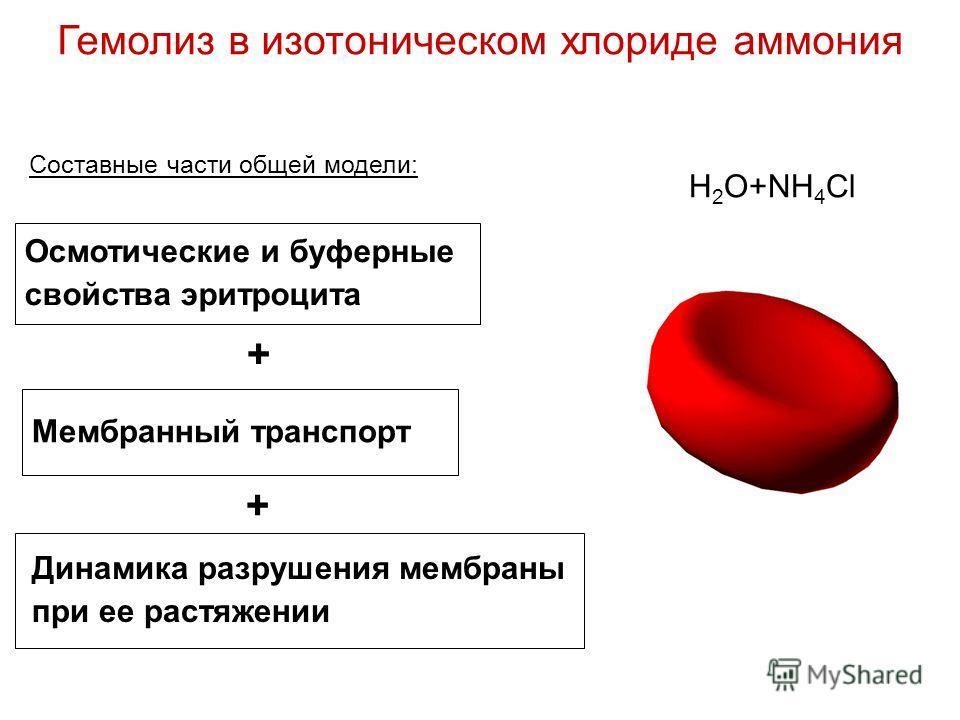 Гемолиз в изотоническом хлориде аммония H 2 O+NH 4 Cl Осмотические и буферные свойства эритроцита Мембранный транспорт Динамика разрушения мембраны при ее растяжении Составные части общей модели: + +