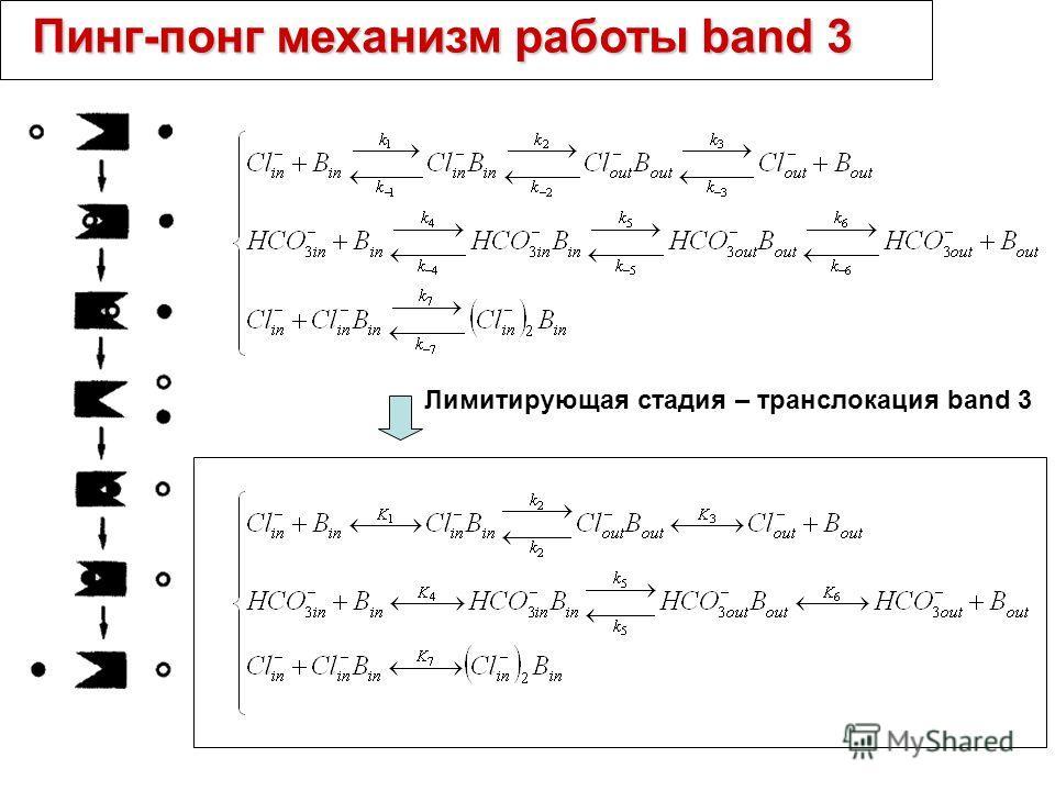 Пинг-понг механизм работы band 3 Лимитирующая стадия – транслокация band 3