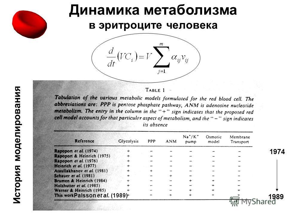 Динамика метаболизма в эритроците человека История моделирования 1989 1974 Palsson et al. (1989)