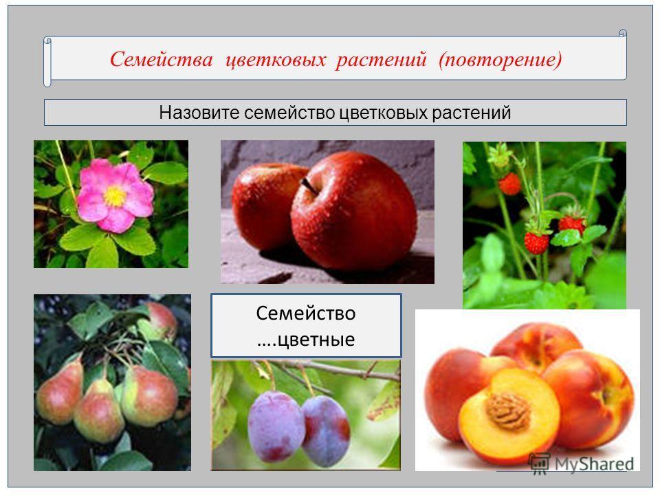 Назовите семейство цветковых растений Семейства цветковых растений (повторение) Семейство ….цветные