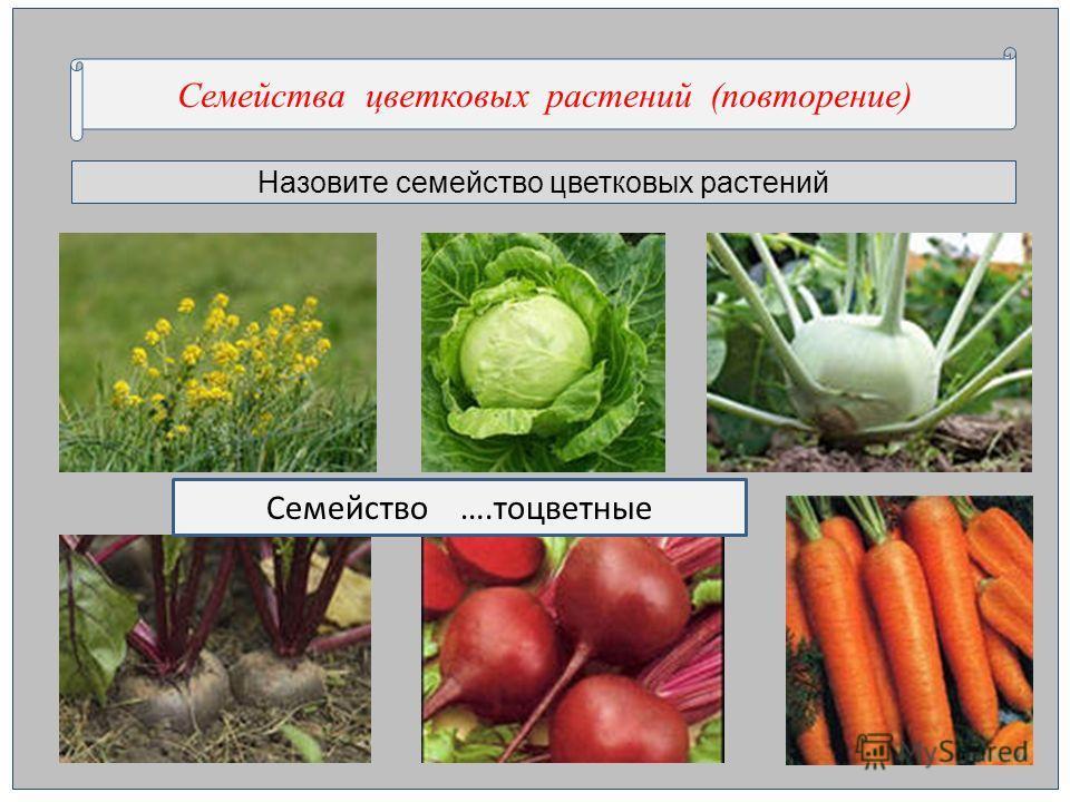 Назовите семейство цветковых растений Семейства цветковых растений (повторение) Семейство ….тоцветные