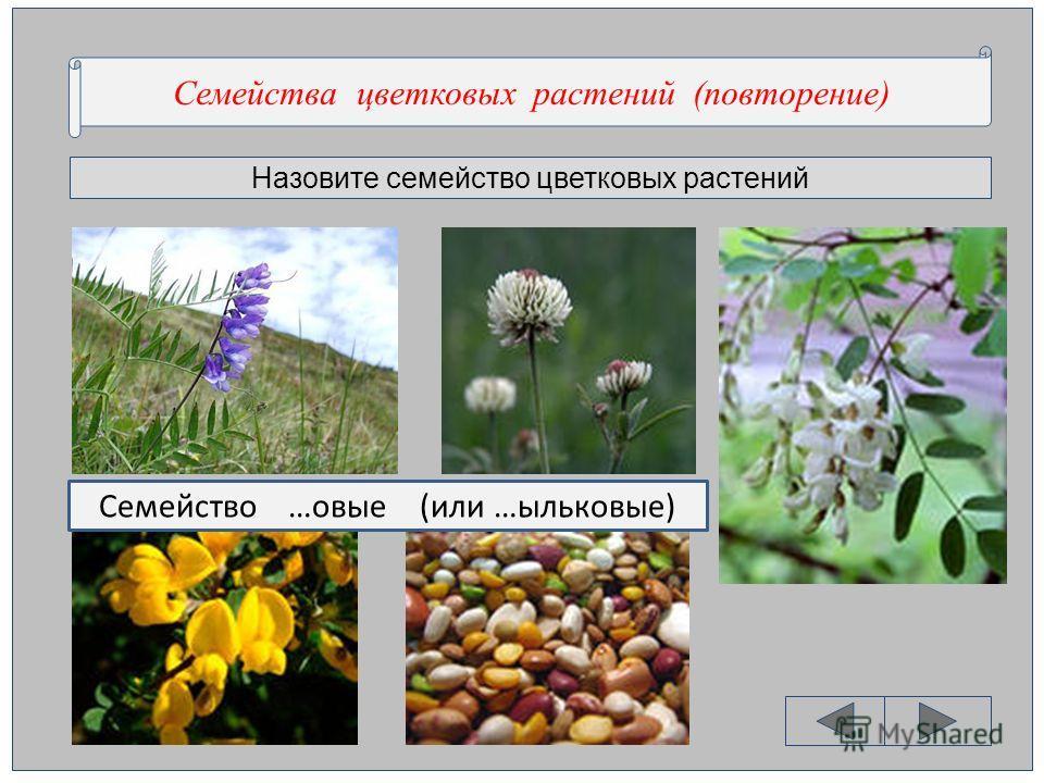 Назовите семейство цветковых растений Семейства цветковых растений (повторение) Семейство …овые (или …ыльковые)