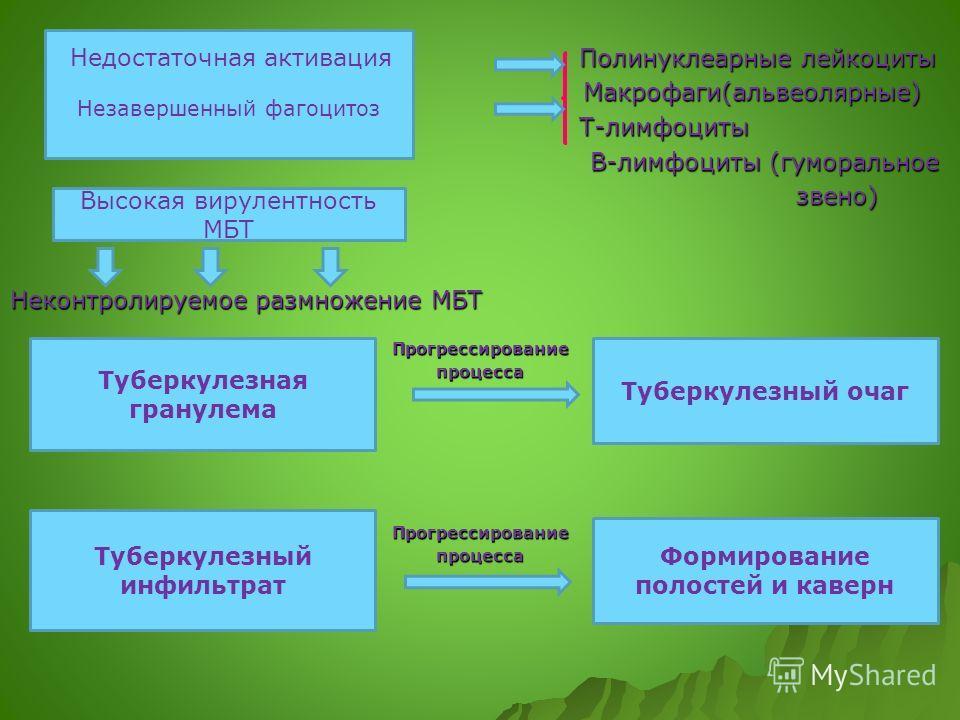 Полинуклеарные лейкоциты Полинуклеарные лейкоциты Макрофаги(альвеолярные) Макрофаги(альвеолярные) Т-лимфоциты Т-лимфоциты В-лимфоциты (гуморальное В-лимфоциты (гуморальное звено) звено) Неконтролируемое размножение МБТ ПрогрессированиепроцессаПрогрес