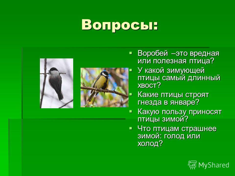 Вопросы: Воробей –это вредная или полезная птица? Воробей –это вредная или полезная птица? У какой зимующей птицы самый длинный хвост? У какой зимующей птицы самый длинный хвост? Какие птицы строят гнезда в январе? Какие птицы строят гнезда в январе?