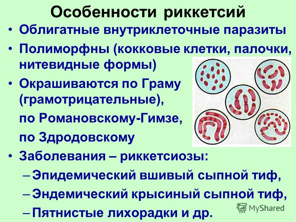 Особенности риккетсий Облигатные внутриклеточные паразиты Полиморфны (кокковые клетки, палочки, нитевидные формы) Окрашиваются по Граму (грамотрицательные), по Романовскому-Гимзе, по Здродовскому Заболевания – риккетсиозы: –Эпидемический вшивый сыпно