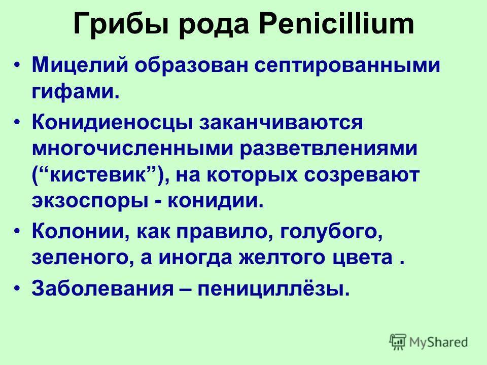 Грибы рода Penicillium Мицелий образован септированными гифами. Конидиеносцы заканчиваются многочисленными разветвлениями (кистевик), на которых созревают экзоспоры - конидии. Колонии, как правило, голубого, зеленого, а иногда желтого цвета. Заболева
