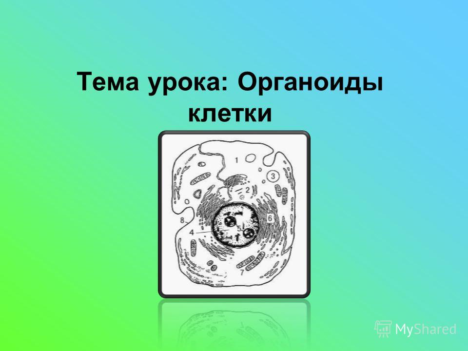 Тема урока: Органоиды клетки