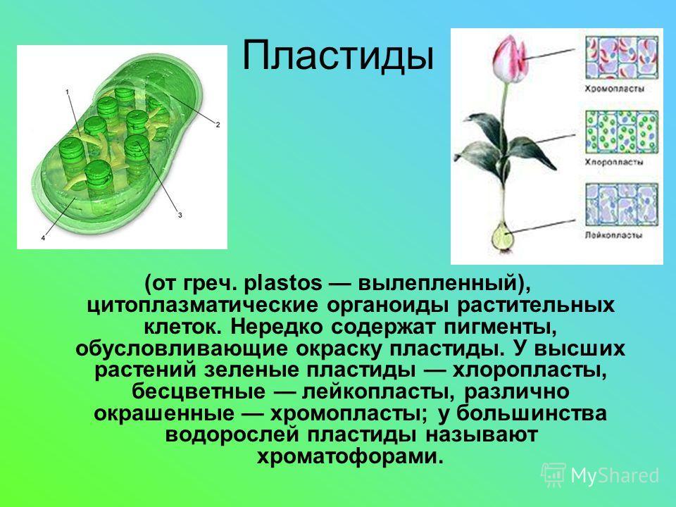 Пластиды (от греч. plastos вылепленный), цитоплазматические органоиды растительных клеток. Нередко содержат пигменты, обусловливающие окраску пластиды. У высших растений зеленые пластиды хлоропласты, бесцветные лейкопласты, различно окрашенные хромоп