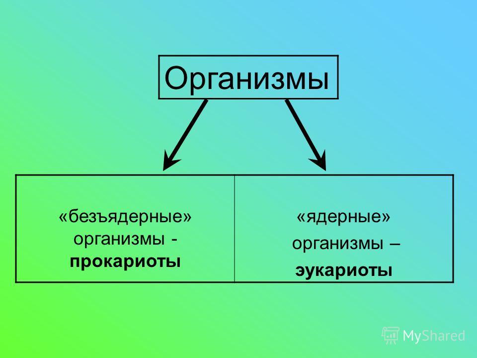 «безъядерные» организмы - прокариоты «ядерные» организмы – эукариоты Организмы
