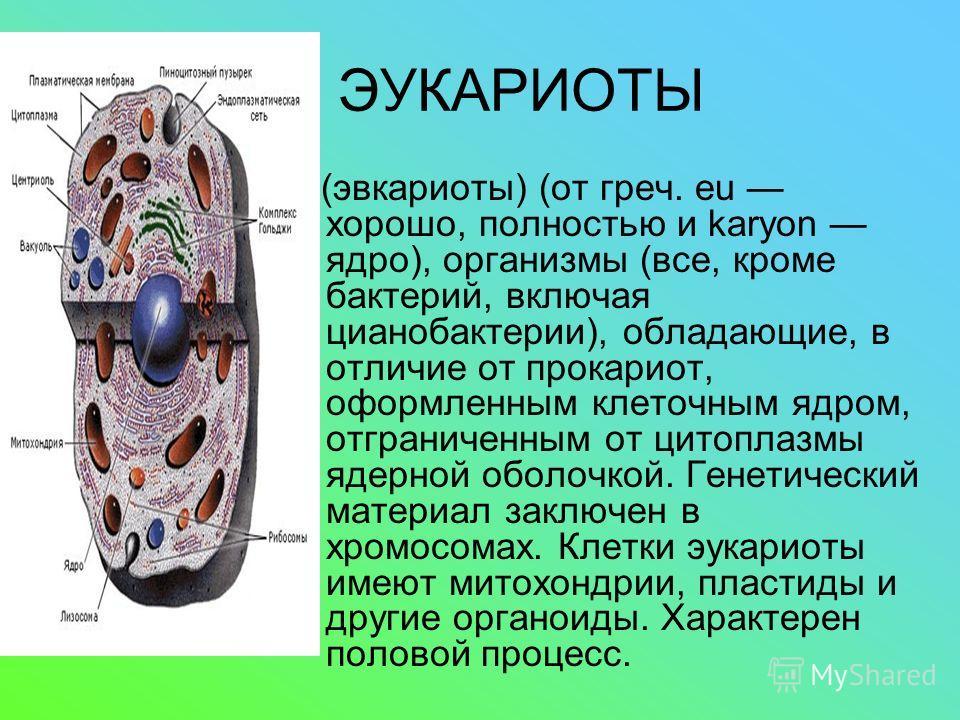 ЭУКАРИОТЫ (эвкариоты) (от греч. eu хорошо, полностью и karyon ядро), организмы (все, кроме бактерий, включая цианобактерии), обладающие, в отличие от прокариот, оформленным клеточным ядром, отграниченным от цитоплазмы ядерной оболочкой. Генетический