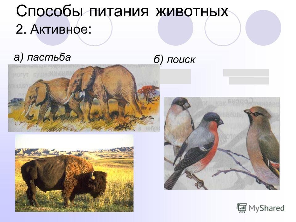Способы питания животных 2. Активное : а) пастьба б) поиск