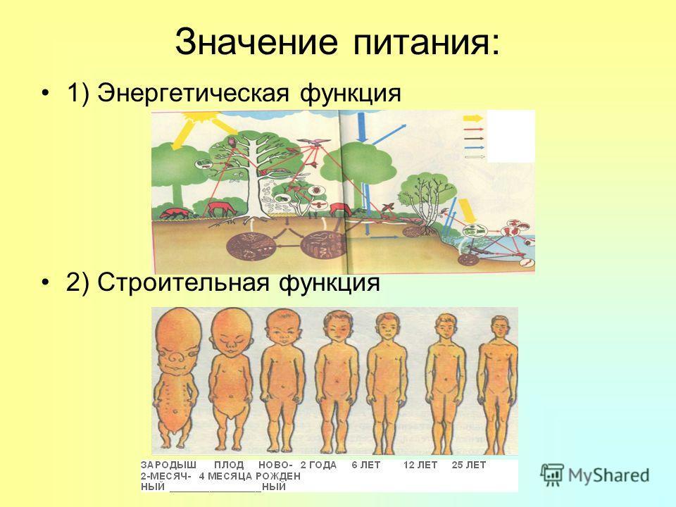 Значение питания: 1) Энергетическая функция 2) Строительная функция