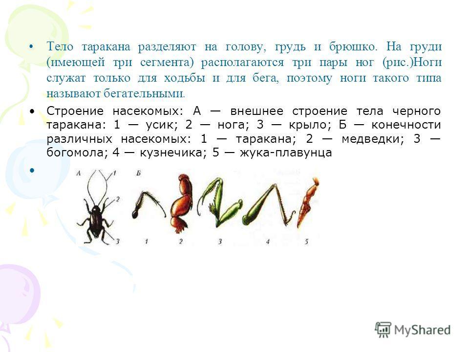 Тело таракана разделяют на голову, грудь и брюшко. На груди (имеющей три сегмента) располагаются три пары ног (рис.)Ноги служат только для ходьбы и для бега, поэтому ноги такого типа называют бегательными. Строение насекомых: А внешнее строение тела