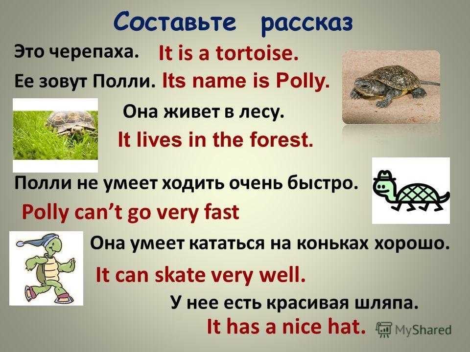 Составьте рассказ Это черепаха. Ее зовут Полли. Она живет в лесу. Полли не умеет ходить очень быстро. Она умеет кататься на коньках хорошо. У нее есть красивая шляпа. It is a tortoise. Its name is Polly. It lives in the forest. Polly cant go very fas