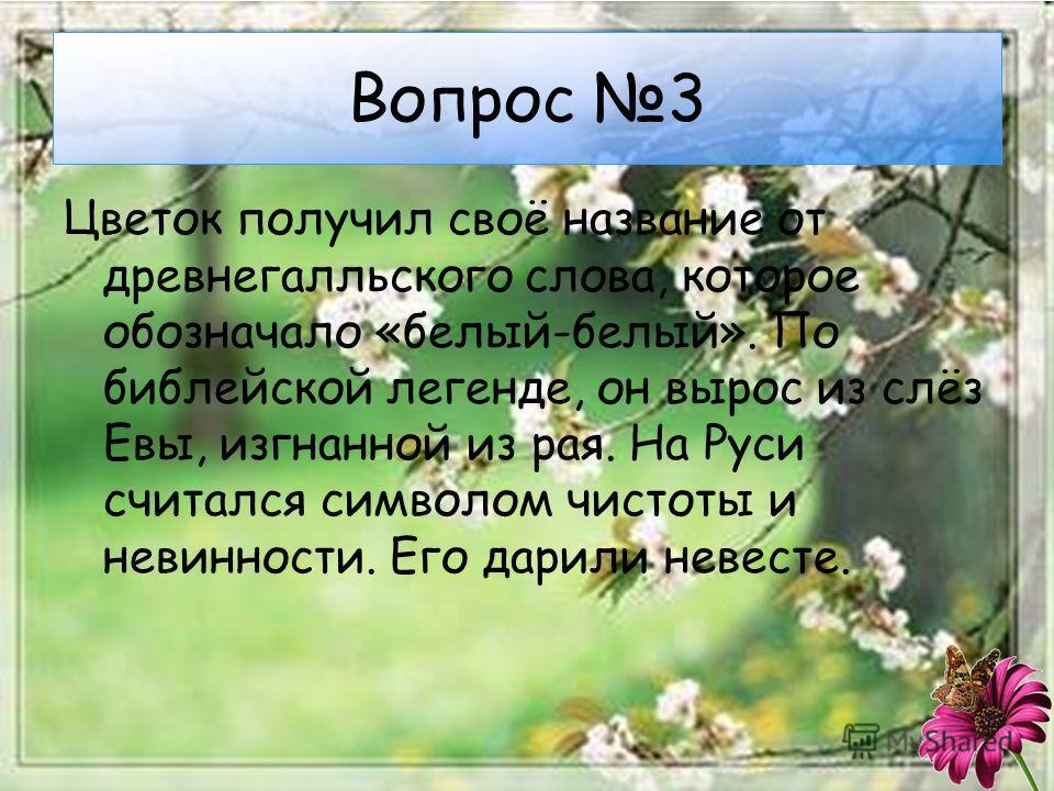 Вопрос 3 Цветок получил своё название от древнегалльского слова, которое обозначало «белый-белый». По библейской легенде, он вырос из слёз Евы, изгнанной из рая. На Руси считался символом чистоты и невинности. Его дарили невесте.
