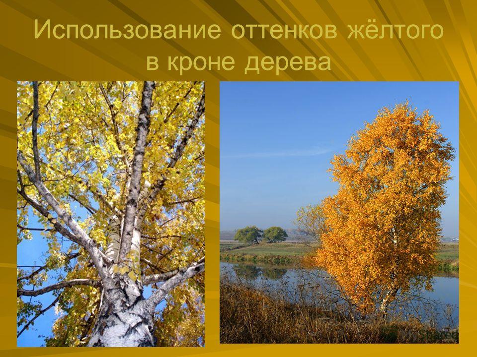 Использование оттенков жёлтого в кроне дерева
