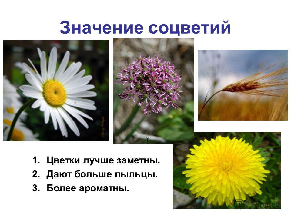 Значение соцветий 1.Цветки лучше заметны. 2.Дают больше пыльцы. 3.Более ароматны.