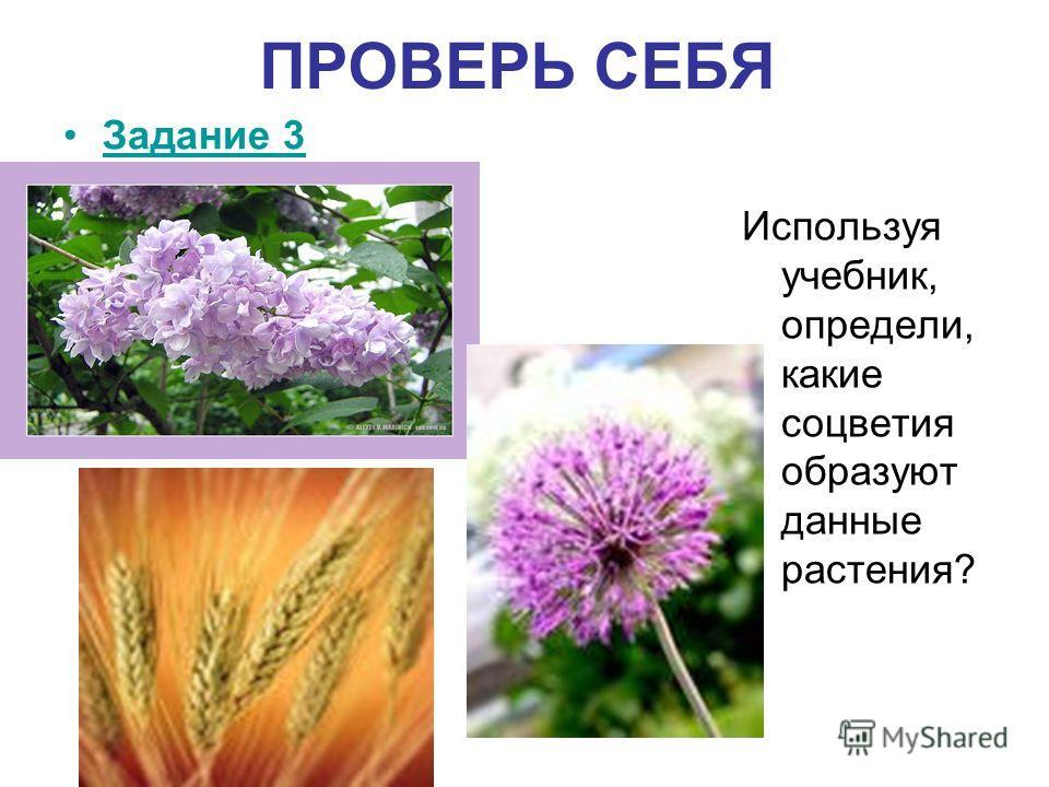 ПРОВЕРЬ СЕБЯ Задание 3 Используя учебник, определи, какие соцветия образуют данные растения?