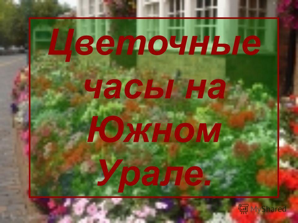 Цветочные часы на Южном Урале.