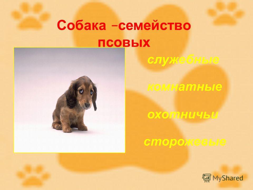 Собака – семейство псовых служебные комнатные охотничьи сторожевые