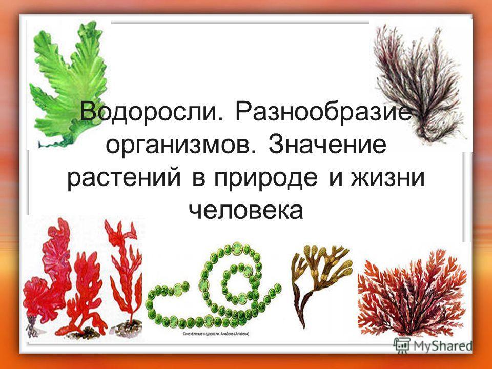 Водоросли. Разнообразие организмов. Значение растений в природе и жизни человека