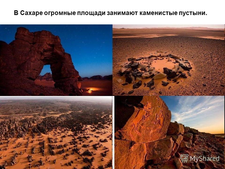 В Сахаре огромные площади занимают каменистые пустыни.