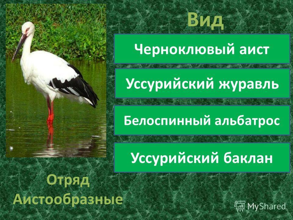 Отряд Аистообразные Вид Черноклювый аист Уссурийский журавль Белоспинный альбатрос Уссурийский баклан