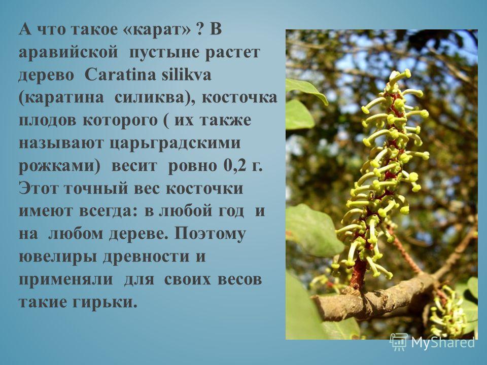 А что такое «карат» ? В аравийской пустыне растет дерево Caratina silikva (каратина силиква), косточка плодов которого ( их также называют царьградскими рожками) весит ровно 0,2 г. Этот точный вес косточки имеют всегда: в любой год и на любом дереве.