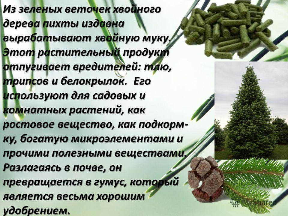 Из зеленых веточек хвойного дерева пихты издавна вырабатывают хвойную муку. Этот растительный продукт отпугивает вредителей: тлю, трипсов и белокрылок. Его используют для садовых и комнатных растений, как ростовое вещество, как подкорм- ку, богатую м