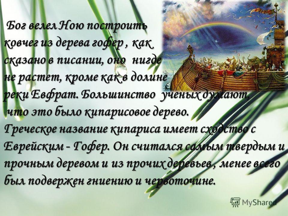 Бог велел Ною построить Бог велел Ною построить ковчег из дерева гофер, как сказано в писании, оно нигде не растет, кроме как в долине реки Евфрат. Большинство ученых думают, что это было кипарисовое дерево. что это было кипарисовое дерево. Греческое
