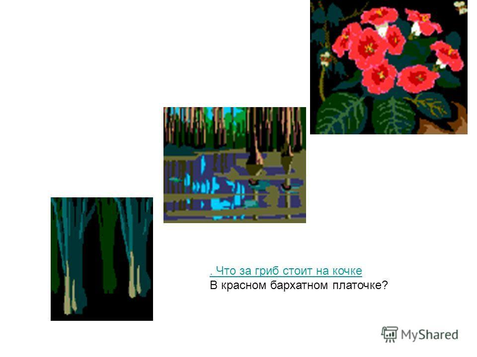 . Что за гриб стоит на кочке В красном бархатном платочке?