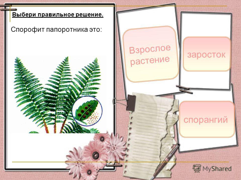 Спорофит папоротника это: Взрослое растение заросток Выбери правильное решение. спорангий