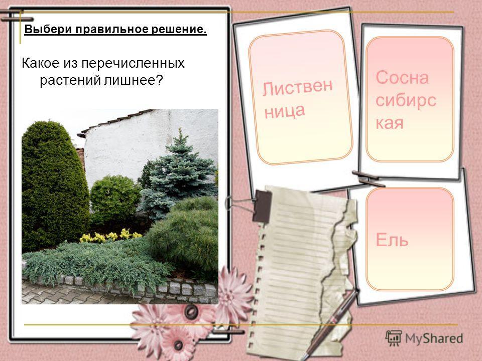 Какое из перечисленных растений лишнее? Листвен ница Сосна сибирс кая Выбери правильное решение. Ель