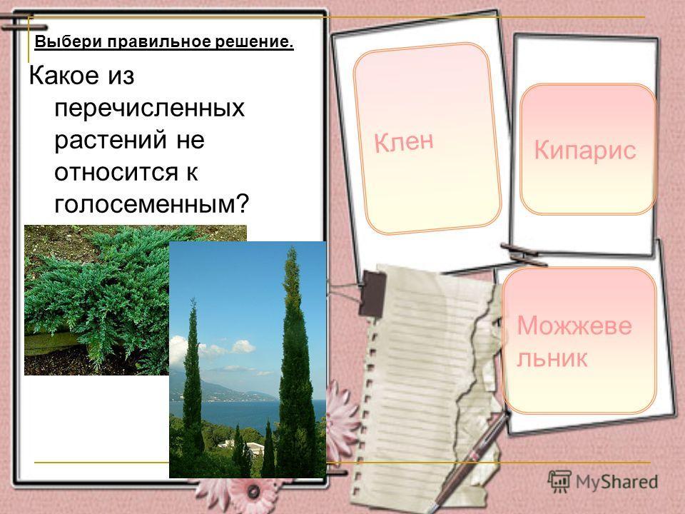 Какое из перечисленных растений не относится к голосеменным? Клен Кипарис Выбери правильное решение. Можжеве льник