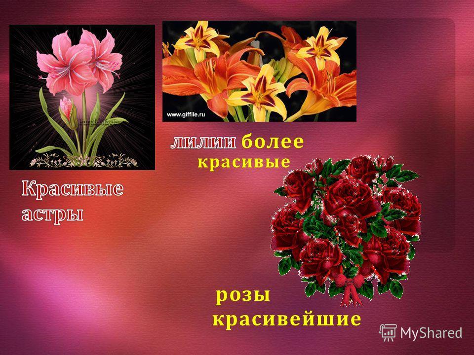 красивые красивые розы красивейшие розы красивейшие