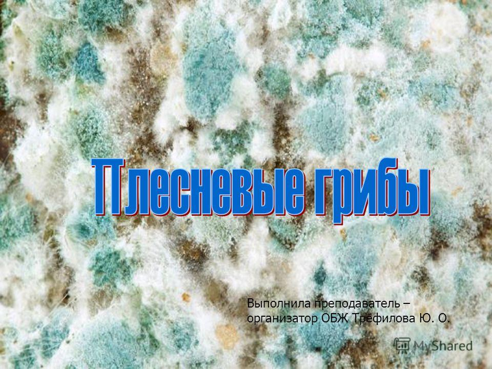 Выполнила преподаватель – организатор ОБЖ Трефилова Ю. О.