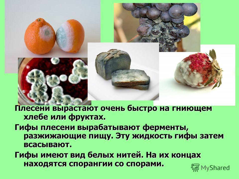 Плесени вырастают очень быстро на гниющем хлебе или фруктах. Гифы плесени вырабатывают ферменты, разжижающие пищу. Эту жидкость гифы затем всасывают. Гифы имеют вид белых нитей. На их концах находятся спорангии со спорами.
