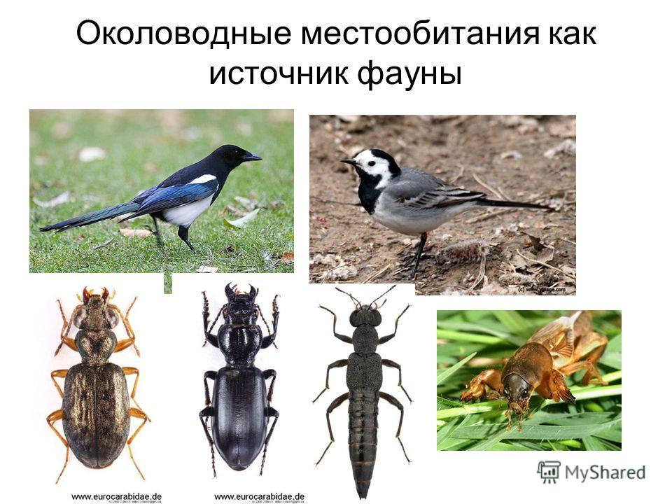 Околоводные местообитания как источник фауны