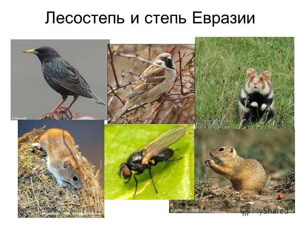 Лесостепь и степь Евразии