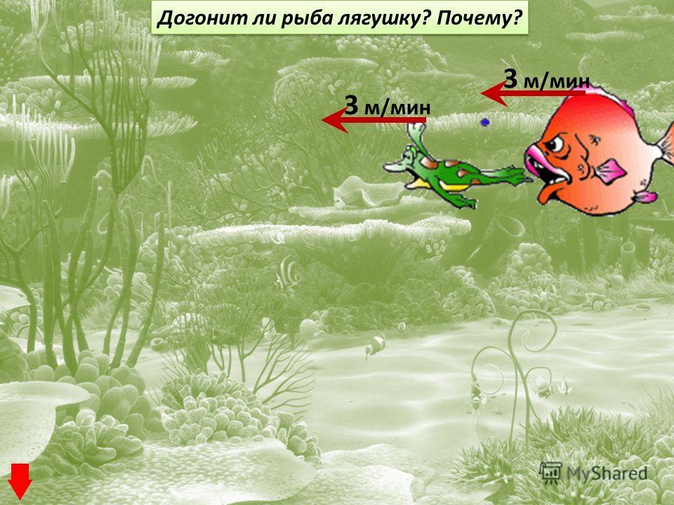 3 м/мин Догонит ли рыба лягушку? Почему?