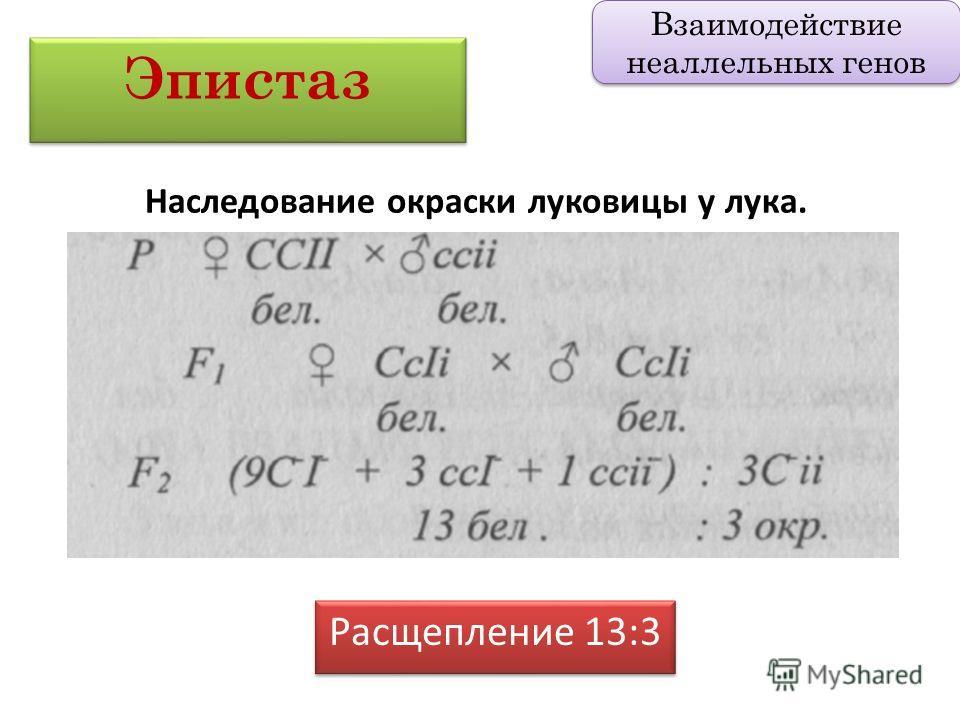 Расщепление 13:3 Эпистаз Взаимодействие неаллельных генов Наследование окраски луковицы у лука.