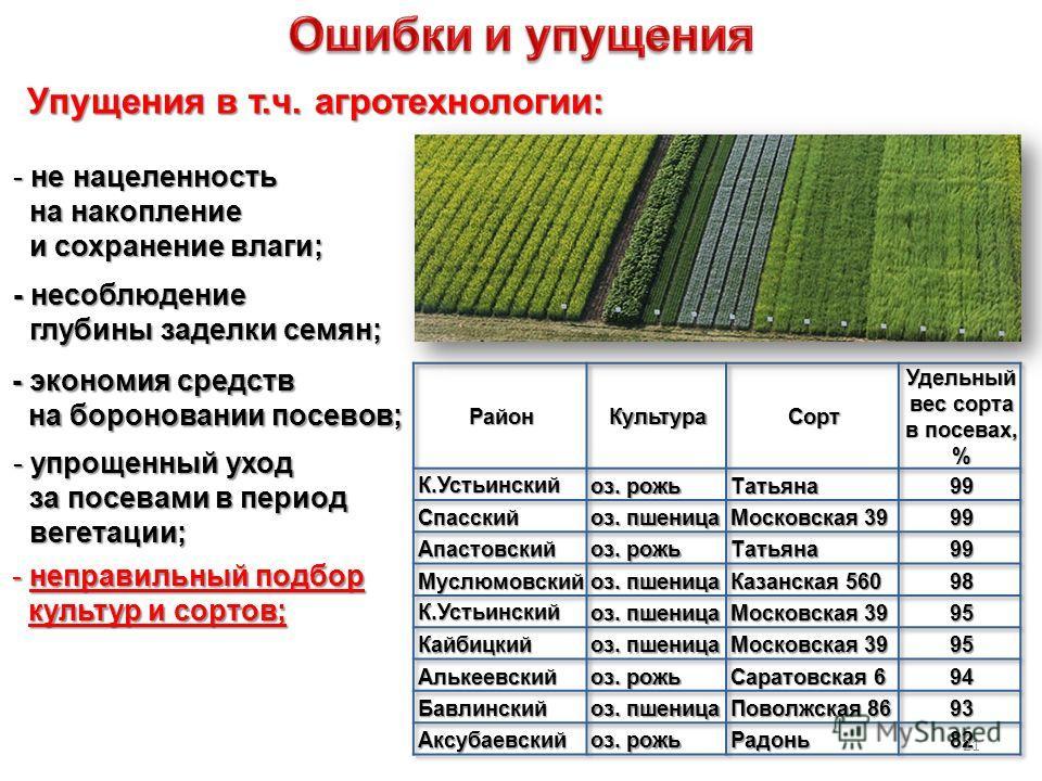 - несоблюдение глубины заделки семян; глубины заделки семян; - экономия средств на бороновании посевов; Упущения в т.ч. агротехнологии: - не нацеленность на накопление на накопление и сохранение влаги; и сохранение влаги; - упрощенный уход за посевам