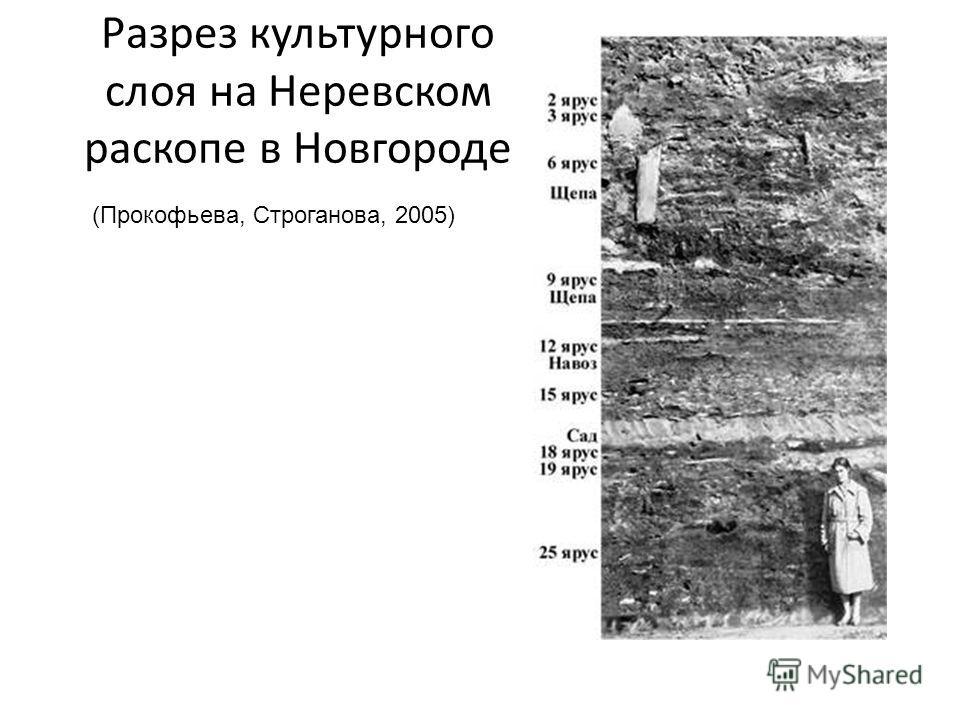 Разрез культурного слоя на Неревском раскопе в Новгороде (Прокофьева, Строганова, 2005)