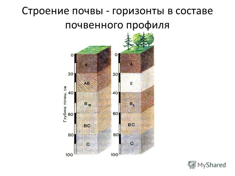 Строение почвы - горизонты в составе почвенного профиля