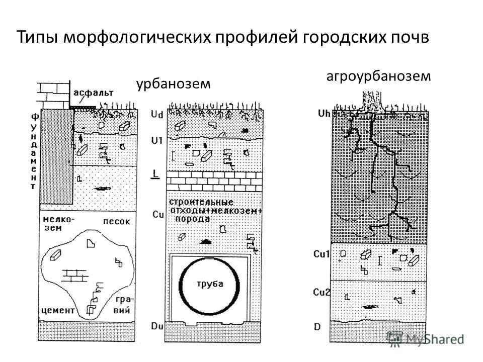 Типы морфологических профилей городских почв урбанозем агроурбанозем
