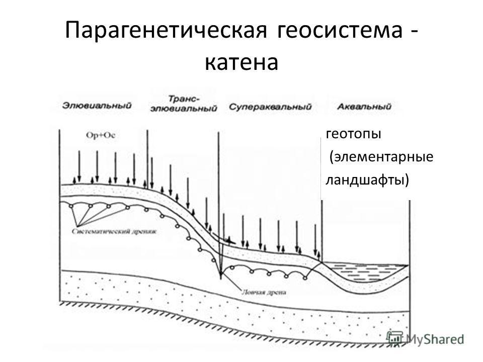 Парагенетическая геосистема - катена геотопы (элементарные ландшафты)