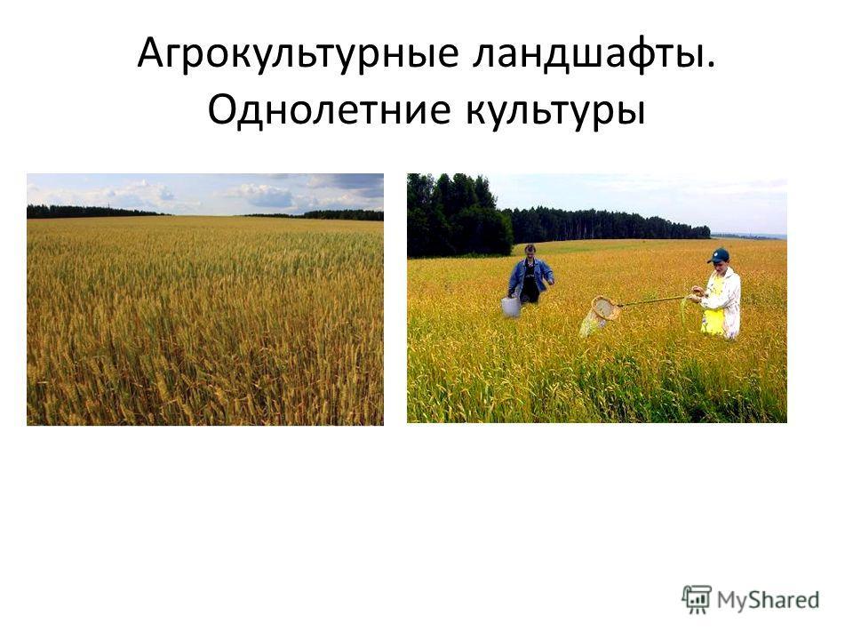 Агрокультурные ландшафты. Однолетние культуры