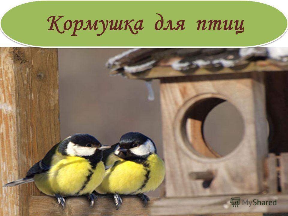 Кормушка для птиц. Кормушка для птиц