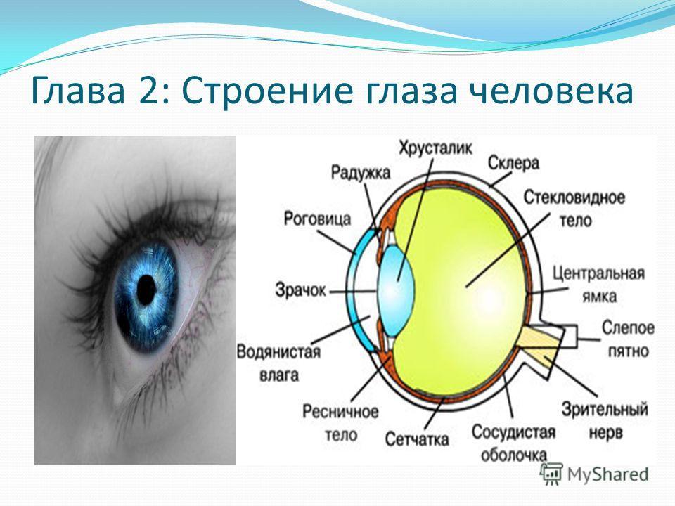 Глава 2: Строение глаза человека