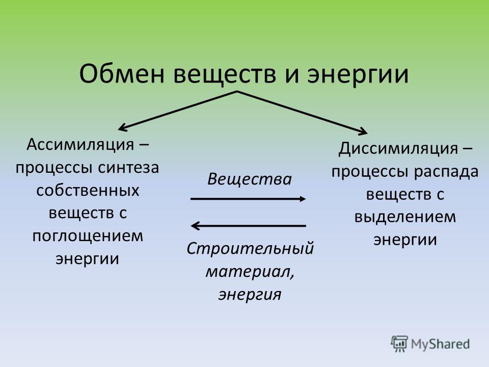 Обмен веществ и энергии Ассимиляция – процессы синтеза собственных веществ с поглощением энергии Диссимиляция – процессы распада веществ с выделением энергии Вещества Строительный материал, энергия